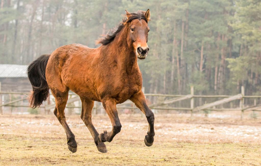 Konie to jest to
