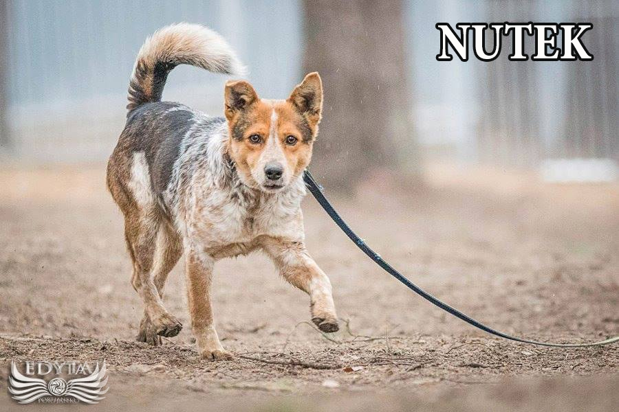 Nutek-1