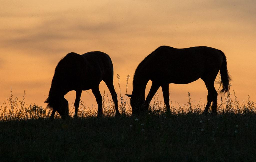 Światło w fotografii koni
