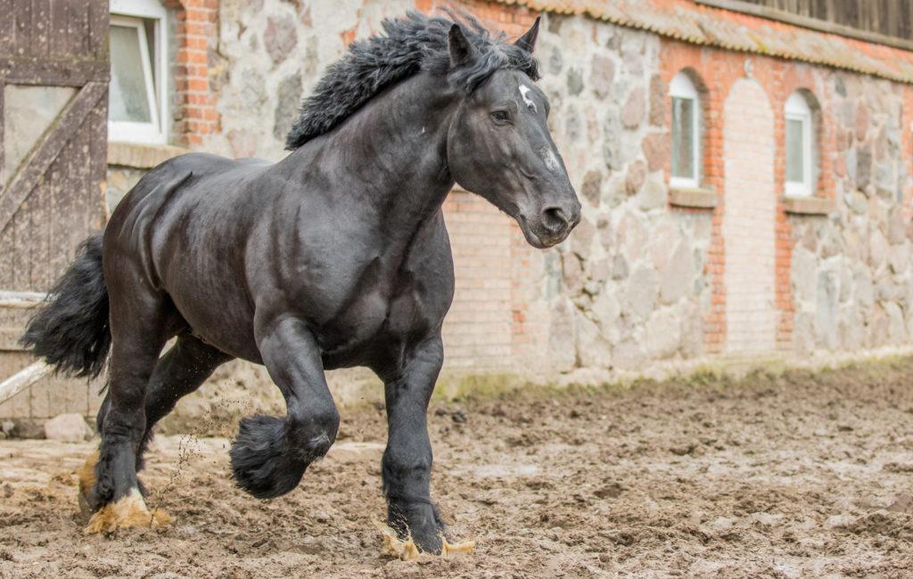 Twój koń jest wyjątkowy
